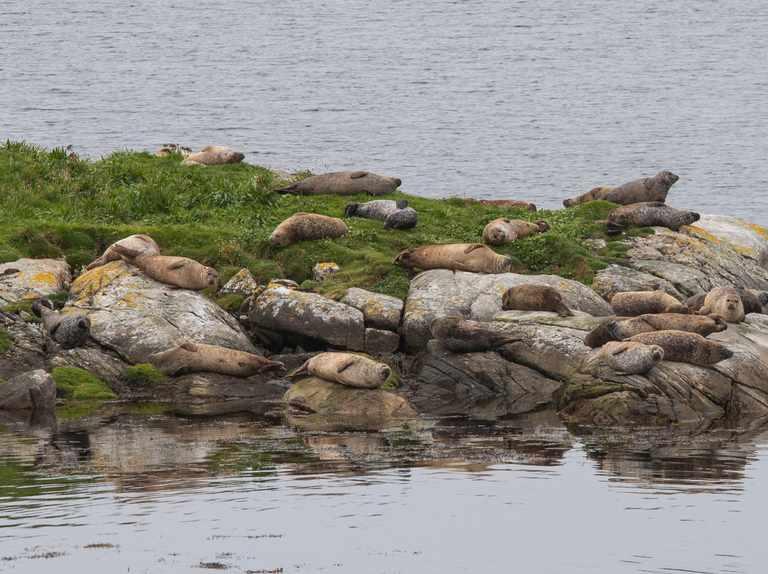 Britain's best seal watching spots