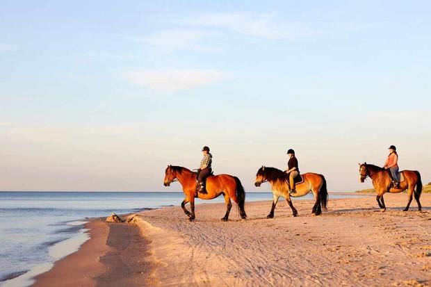 Horse riding on beach