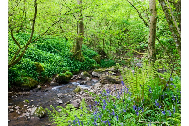 Pwll-y-Wrach Nature Reserve, Wales