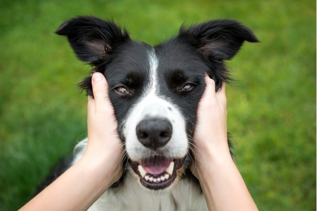 Girl patting a border collie