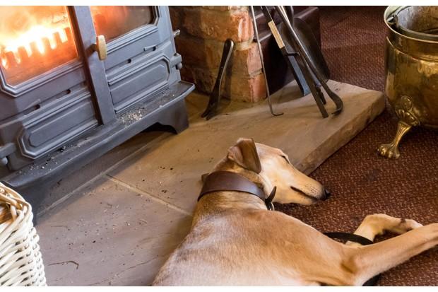 Dog sleeping by log burner in pub