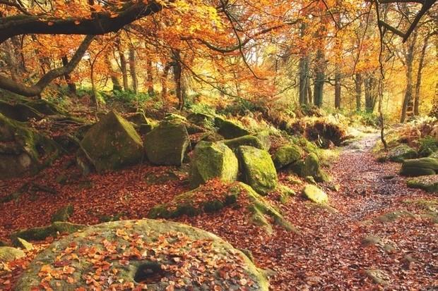 Padley Gorge, Yorkshire