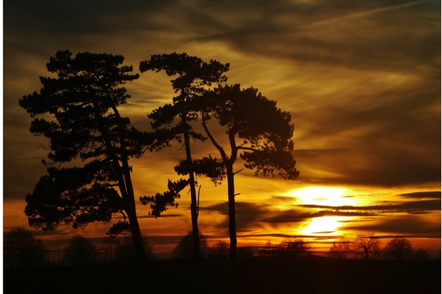 Silhouetted trees at sunset
