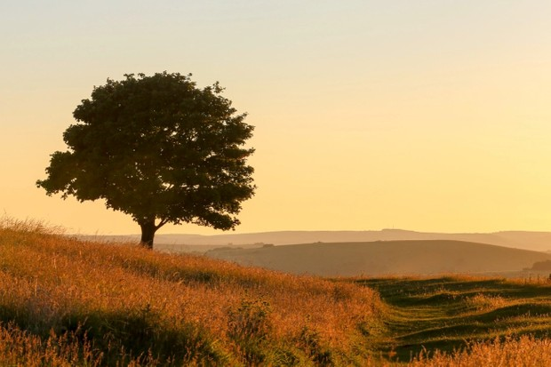 Solitary tree at sundown on Cissbury Ring