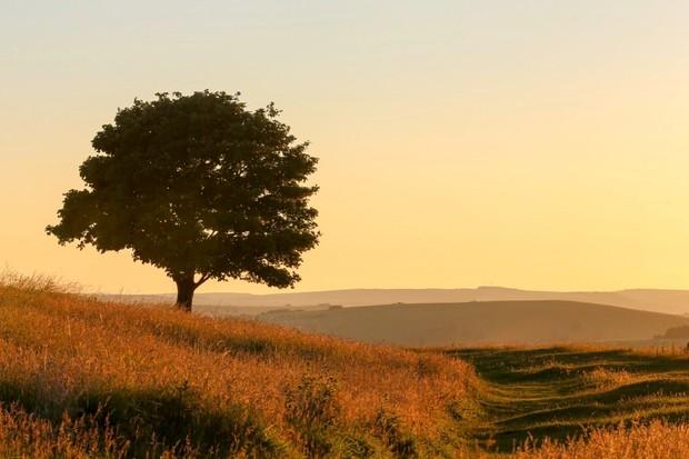Solitary tree at sundown on Cissbury Ring