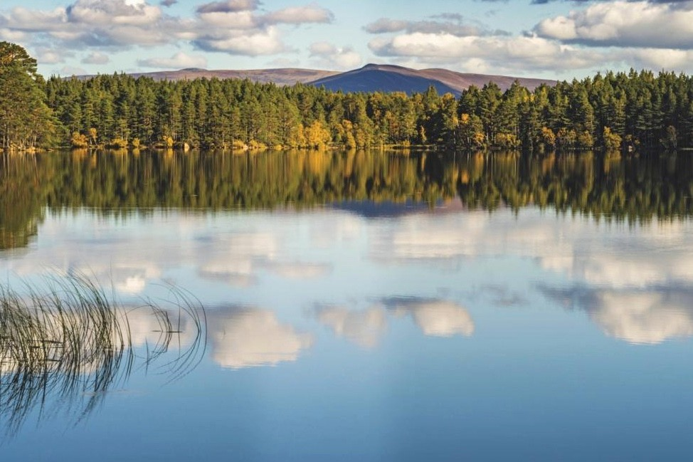 Loch Garten is hidden within Abernethy Forest/