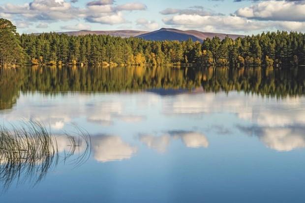 Loch Garten is hidden within Abernethy Forest/