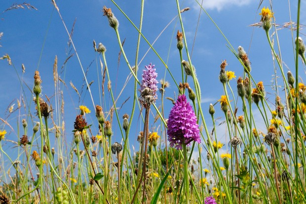 Guide to hay meadows in the UK - Countryfile com