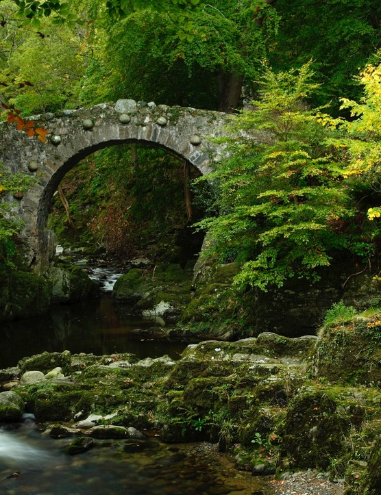 Tollymore Forest, County Down