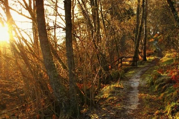 Birks of Aberfeldy in autumn