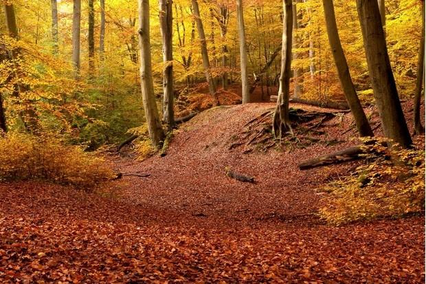 Burnham Beeches National Nature Reserve