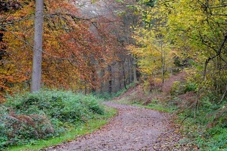 Forest track through Highmeadow Woods