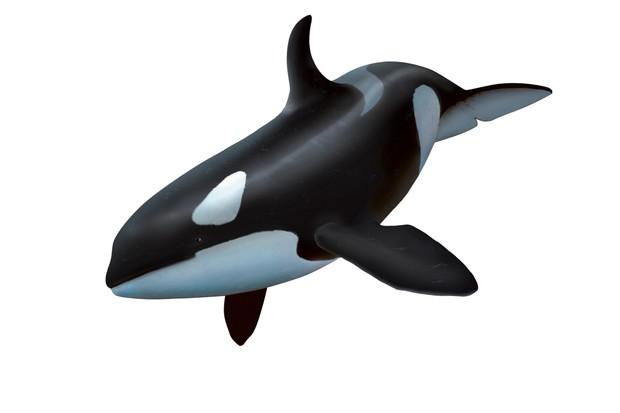 Female killer whale, artwork