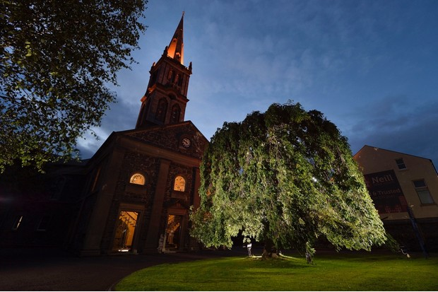 Weeping Ash Tree at 1st Bangor Presbyterian Church, Bangor, Northern Ireland. Picture: Michael Cooper