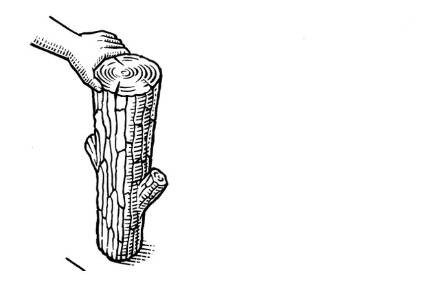 log illustration