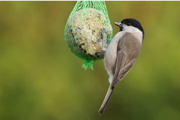 how to make fat balls for your garden birds. Black Bedroom Furniture Sets. Home Design Ideas
