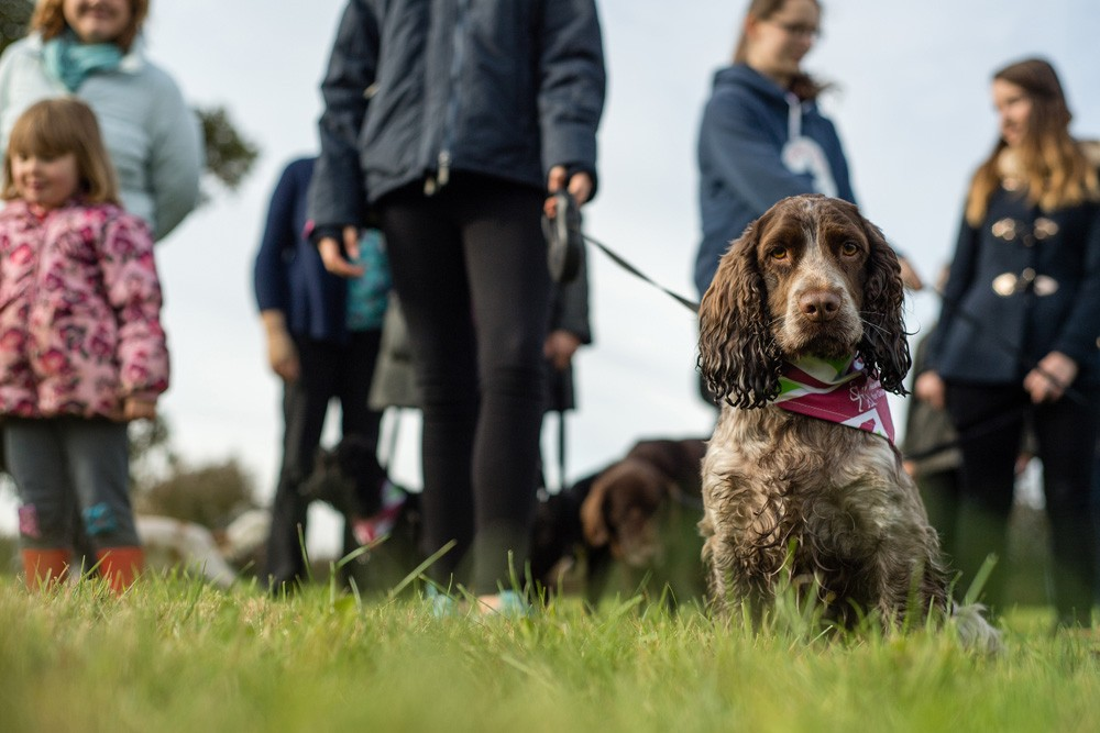 Hearing Dogs Shoot