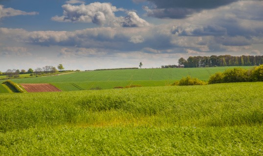 Green feilds in the lincolnshire wolds