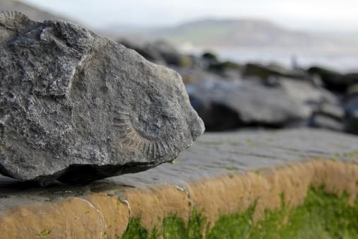 beach fossil jurassic coast dorset england
