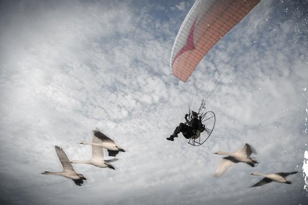 2.-Sacha-with-swans_landscape-1de2241