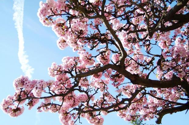 2Blossoms-732eab0