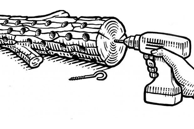 Illustration of log bird feeder