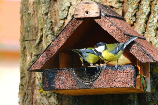 Birdhouse full of birds