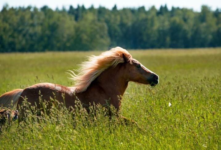 pony runs