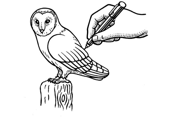 5.20BBC20Country20How20to20Draw20Barn20Owl20artwork2042C5-b01d1c7
