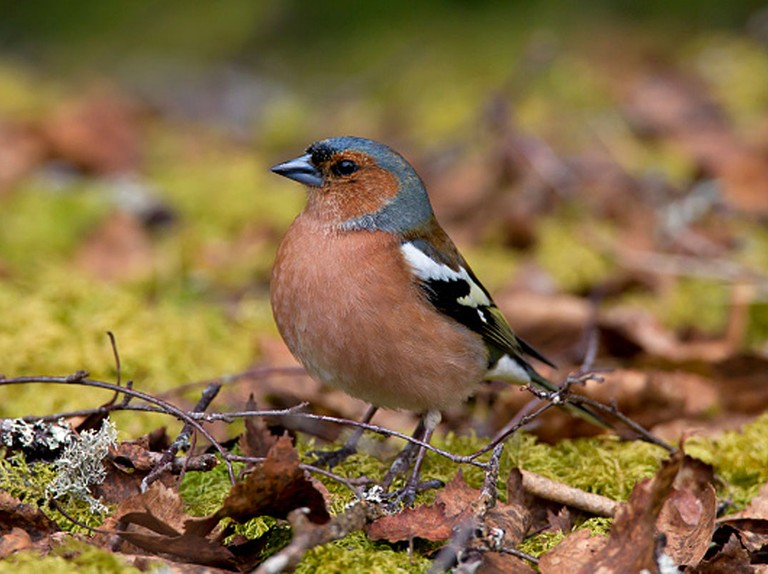 How to prepare your garden for autumn and winter birds