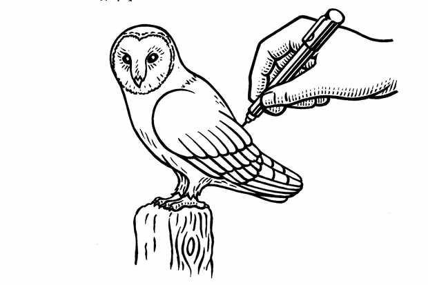 6-BBC-Country-How-to-Draw-Barn-Owl-artwork-45-0f088ce