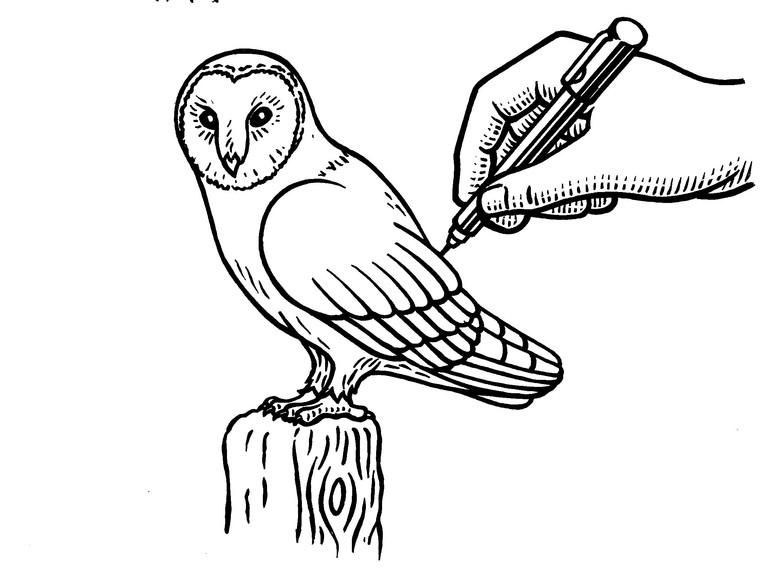 How to draw a barn owl - Countryfilecom