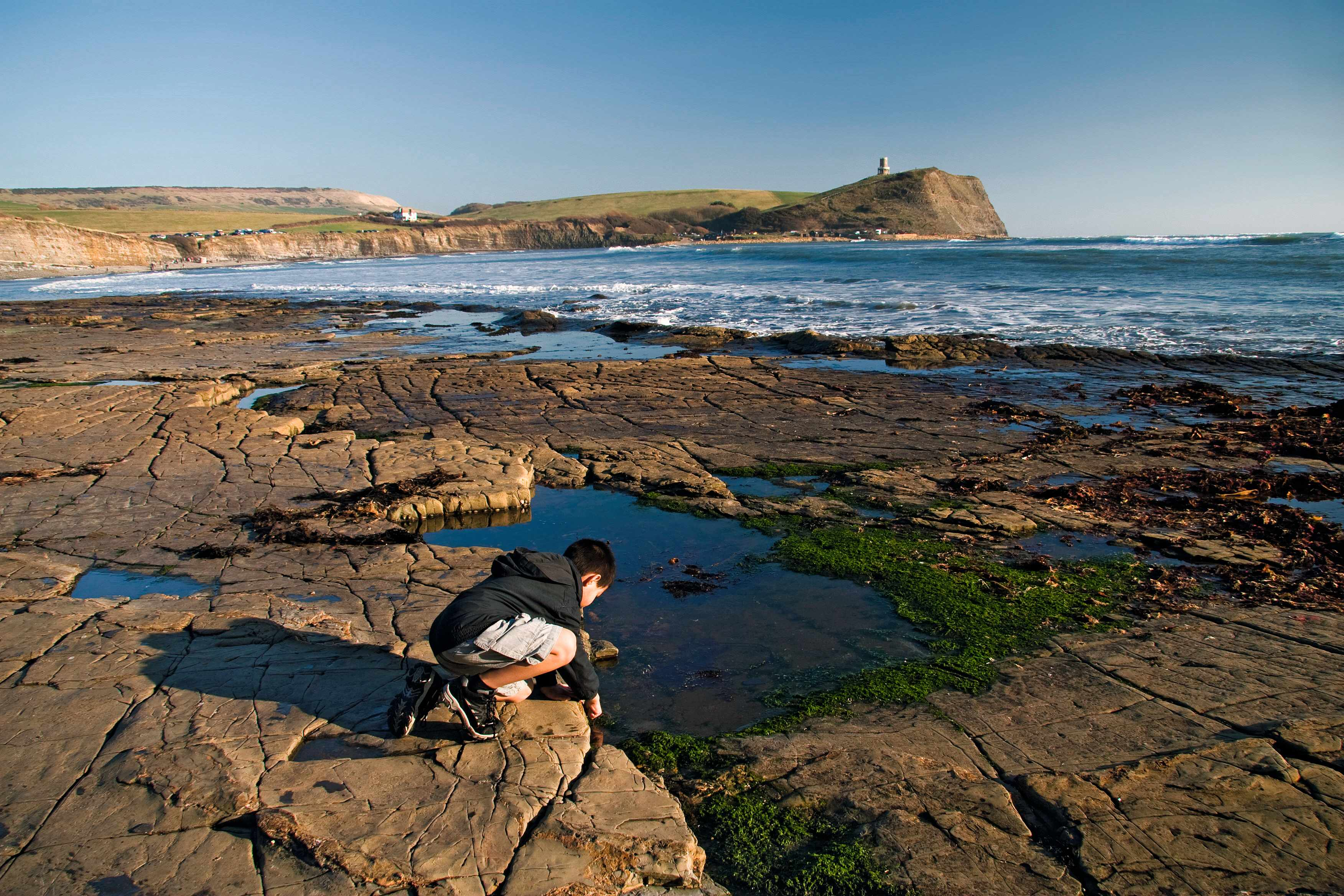 Boy rockpooling, kneeling on rocks, Kimmeridge Bay, Dorset, England, february