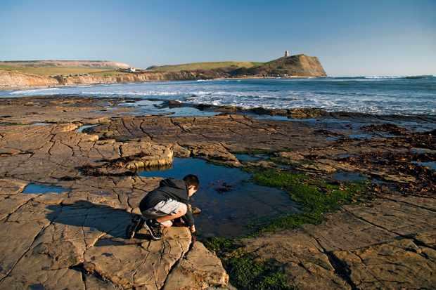 Boy rockpooling, kneeling on rocks, Kimmeridge Bay, Dorset, England, february
