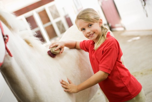 Girl brushing horse