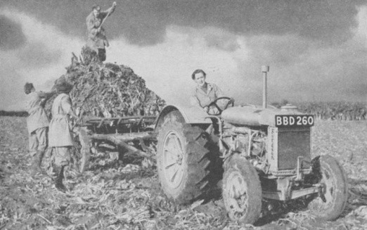 Women's Land Army lifting a crop, World War II, 1940