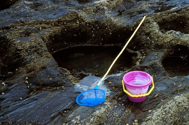 Bucket and net beside a rockpool