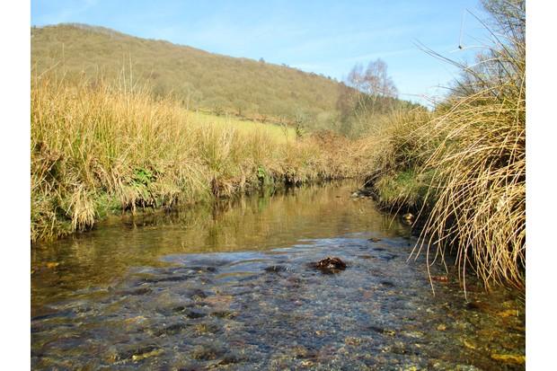 A-typical-watervole-survey-site.-Credit-PTES.-697b741