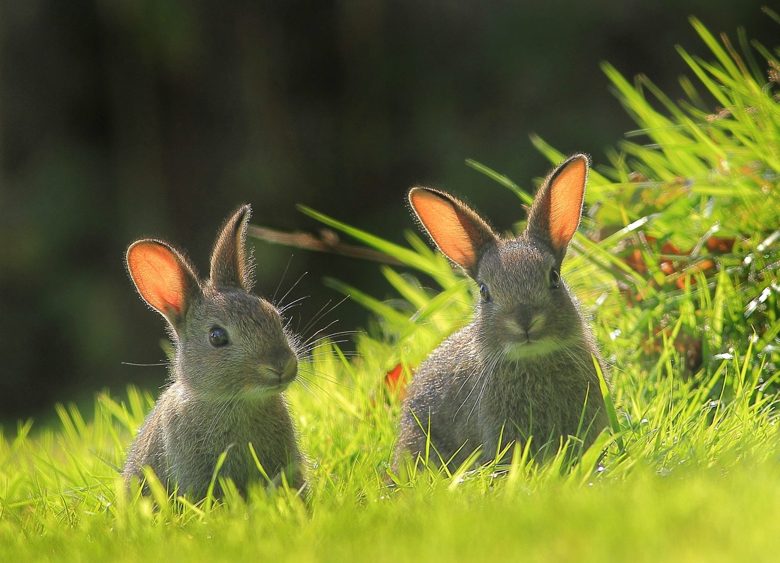 Bbc countryfile photo competition 2019 voting