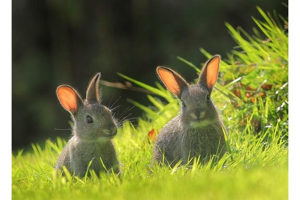 APRIL20-Easter Bunnies by Lyndon Hill ©Lyndon Hill