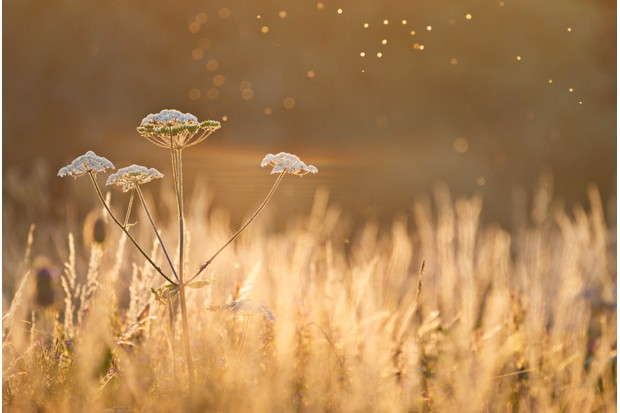 AUG20-Fields of Gold by Sean Stones ©Sean Stones