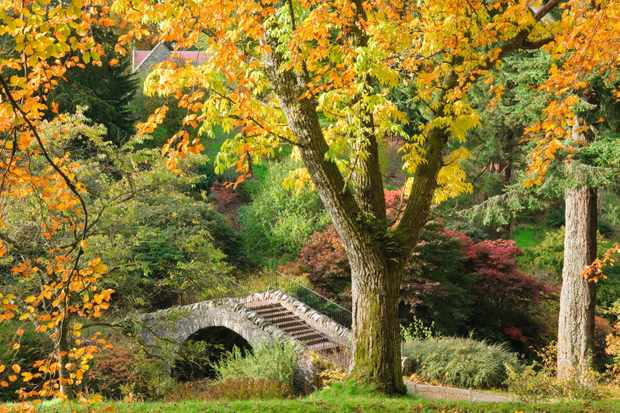 The Swiss Bridge in Scrape Glen at Dawyck Botanic Garden, Stobo, Scottish Borders, Scotland