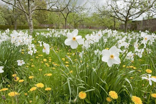 Acorn-Banks-spring-garden-National-Trust-Images1-8e40762
