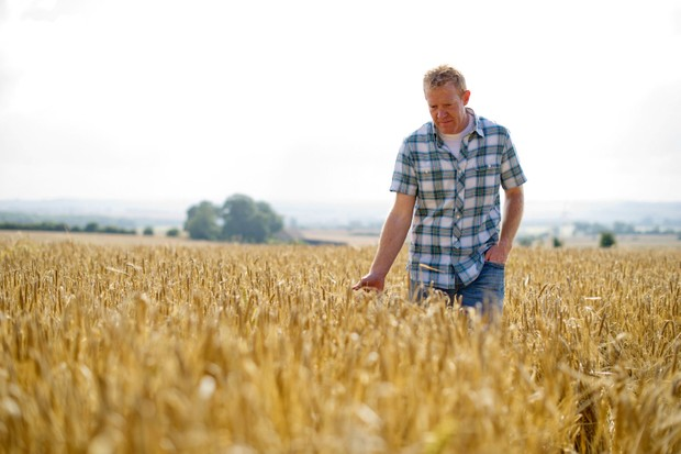 Adam Henderson on harvest: the rise of maize in the UK