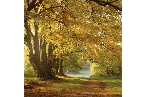 Ashridge-estate-woods-C2A9National-Trust-Images-Michael-Caldwell_0-6166ca7