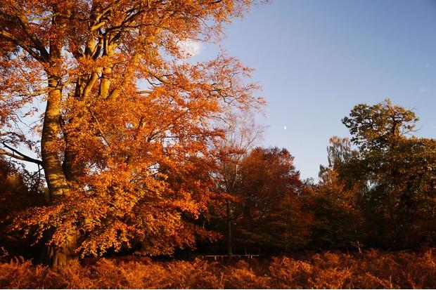 Attingham_autumncolour_3_creditSean-Hattersley_0-39dc68d