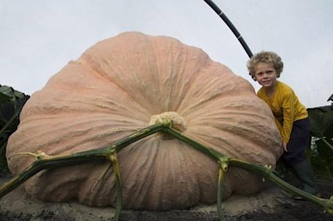 BaggsPumpkin_main-929a553