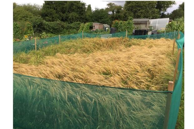 Barley2010-7795dce
