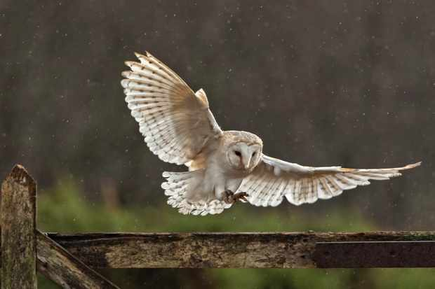 Guide To Britain S Owl Species Where To See And Common
