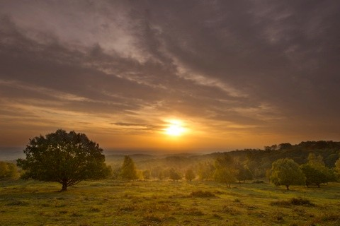 Scenic view of the sun rising over woodland, National Forest, October, UK